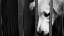 One of the thieves claims to have stolen more than 3,000 dogs in the space of seven years.