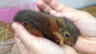 The staff at Knoxwood Wildlife Rescue Trust in Wigton have been nursing him back to health