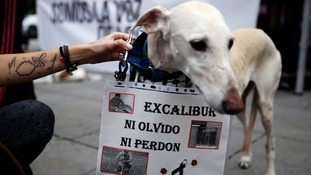 A placard is hung on a dog during a protest against the killing of Excalibu