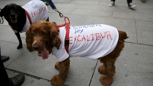 Two dogs wear T-shirts reading  'I'm also Excalibur'