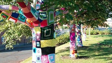 The trees were 'yarn bombed' at night, surprising residents in the morning