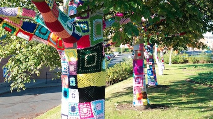 The Trees Were U0027yarn Bombedu0027 At Night, Surprising Residents In The Morning