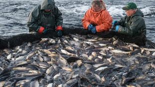 North Devon fishing industry under threat