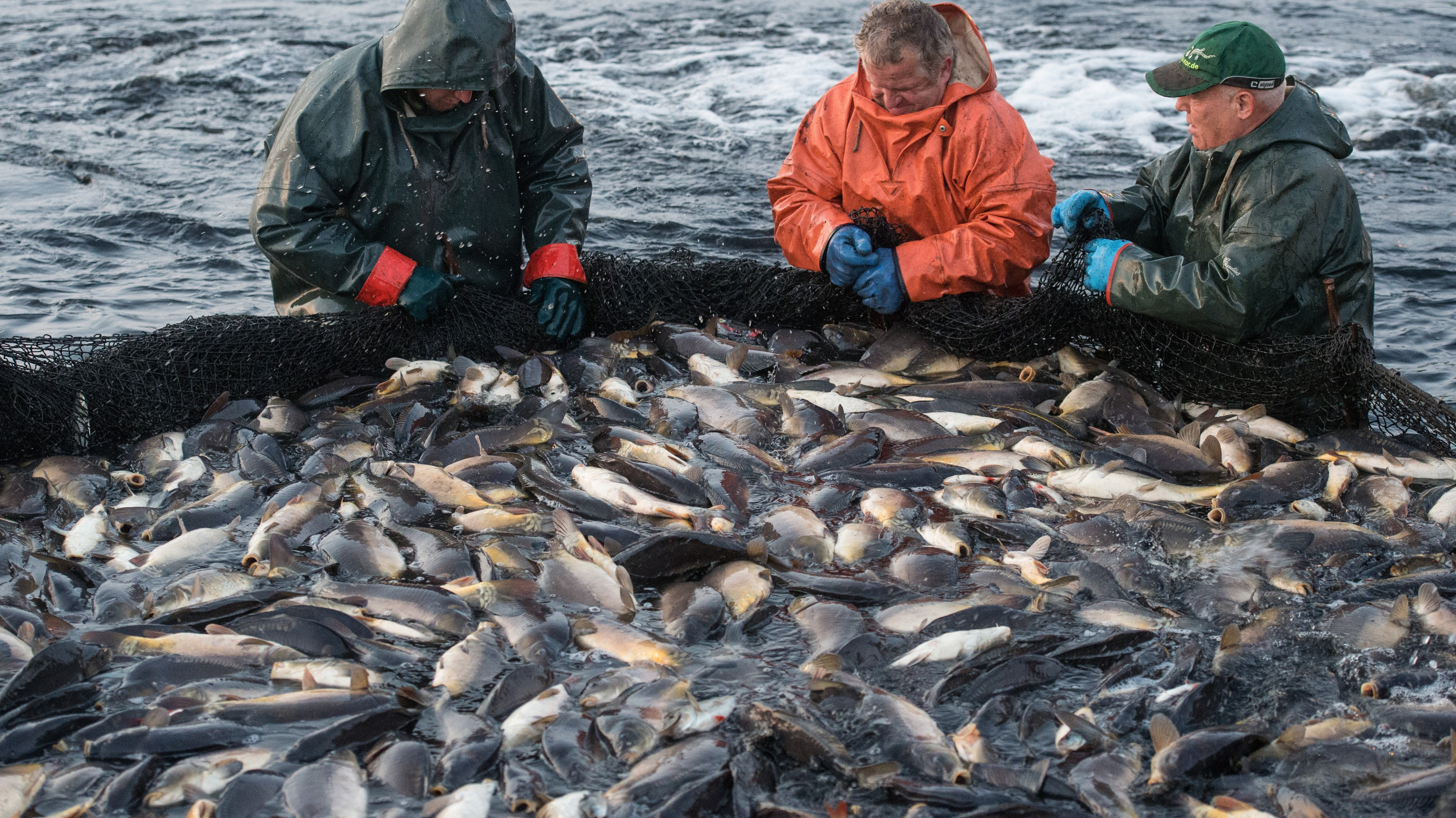 fishinh industry in canada essay Bp-344e quota licensing in canada's fishing industry prepared by claude emery political and social affairs division september 1993.