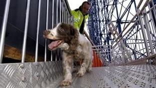 A Lancashire Police dog.