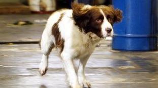 A police dog.