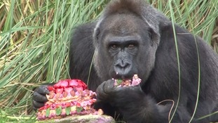 Zaire seemed to be enjoying the pink birthday cake made of fruit, vegetables and cashew nut frosting.
