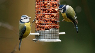 Numbers of garden birds continue to fall