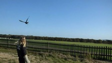 Buzzard released