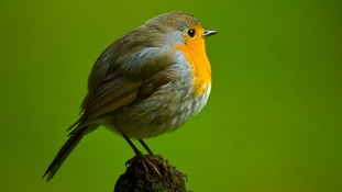 The app will recognise which species of bird is singing.