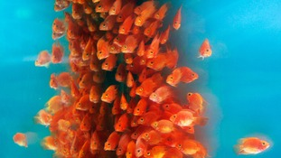 A new study proves fish are more intelligent than previously thought