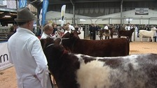Annual Borderway Agri Expo