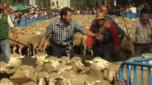 Sheep_Rome