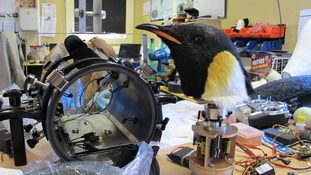 The penguin cam gets a service back at the workshop.