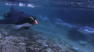 An underwater penguin cam.