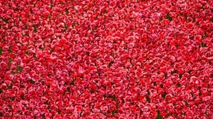 Don't want the poppies to disappear from Tower of London? An online campaign has begun to keep them