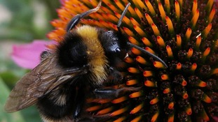 Plan to save bees a 'step forward' say conservationists.