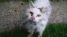 The owenrs say Claude was an elderly cat with naturally long hair