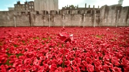 Key parts of poppy display to remain at Tower of London