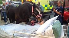 Sheila Marsh saying goodbye to her horse Bronwen