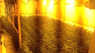 4000 cannabis plants found in a lock up