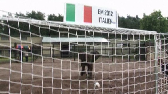 Nelly the elephant prepares to shoot into goal