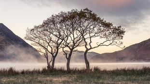 'A Sense of Belonging, Crummock, Trees, Cumbria'.