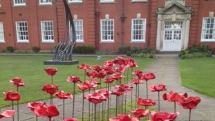 School with poppies
