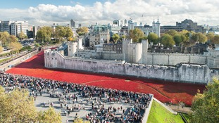 From a single flower to a field of Remembrance: Tower of London's Blood Swept Lands and Seas of Red