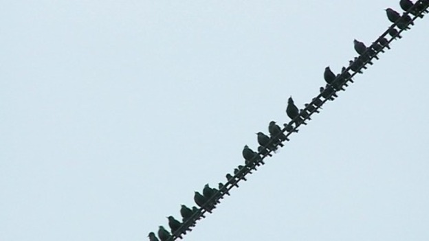 starlings_ITV_Border