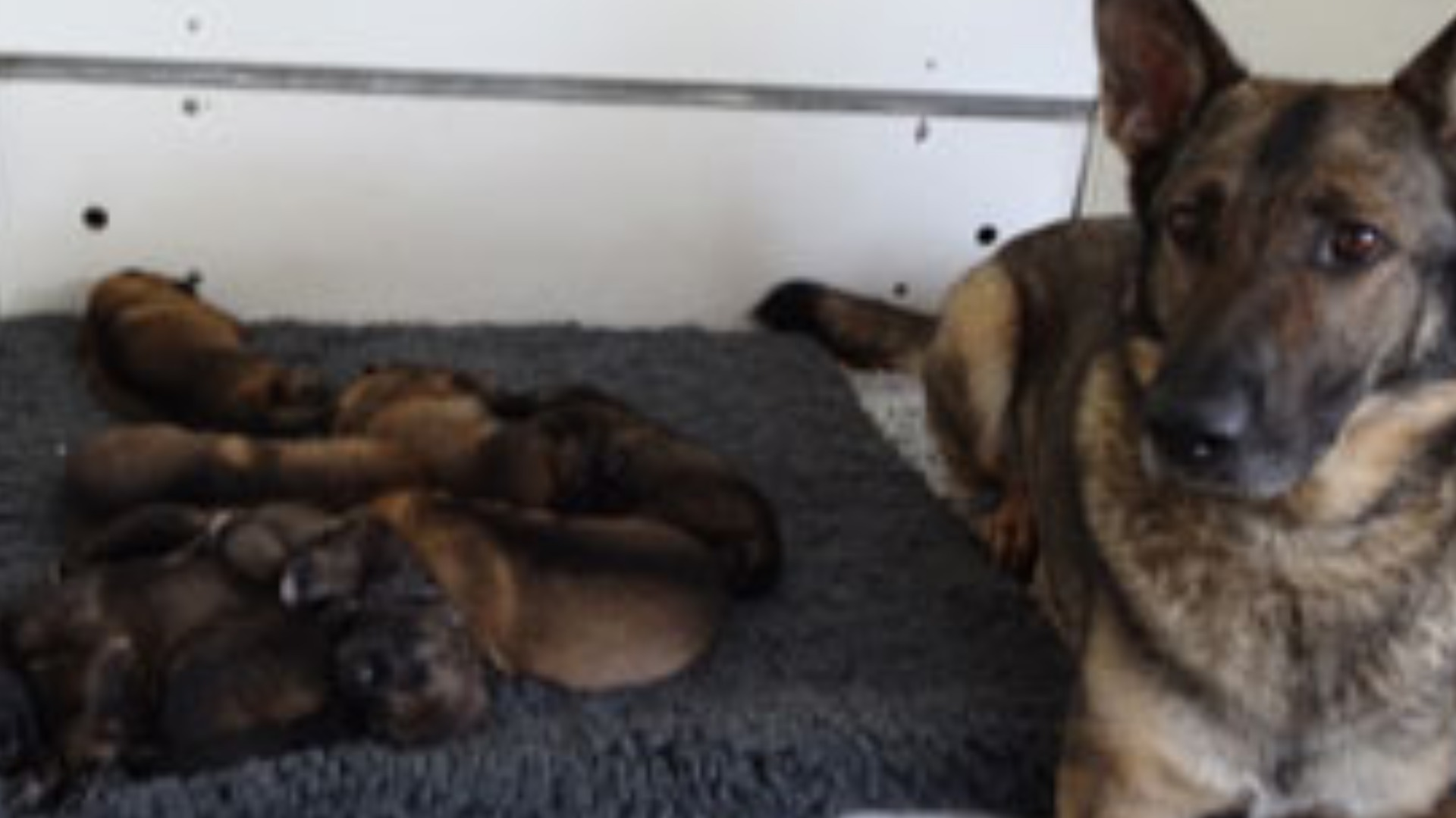 video police ask children to name puppies west country