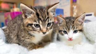 Cramar Cat Rescue And Sanctuary Birmingham West Midlands