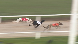 Going to the dogs: Horses and greyhounds at the same racecourse