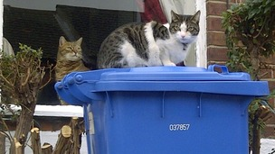 A cat on a bin
