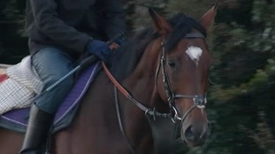Four foals from Frankel will be auctioned today.