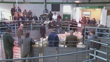 The annual livestock event takes place at Newtown Street Boswells