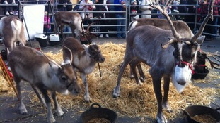 Every year the reindeer and Father Christmas parade through Wells