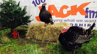 Queen guitarist Brian May 'furious' as radio station plans to kill Christmas turkeys live on air
