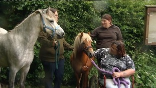 Warning after Forest of Dean ponies attacked