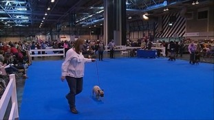 Dog lovers from across the country flocked to the NEC.