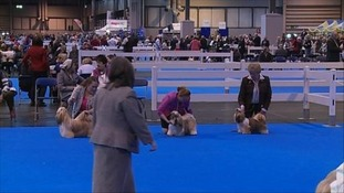 Today is the start of the Ladies Kennel Association Championship.