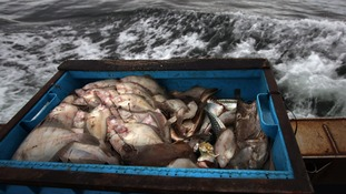 Plymouth Fisheries Manager warns fishermen in the South West will lose out