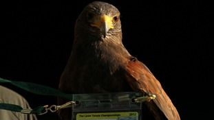 Rufus the Hawk has his own security pass on Centre Court.