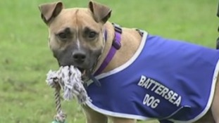 Will Biscuit the unwanted dog ever find a new home?