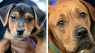 Can you help these dogs find a home this Christmas?