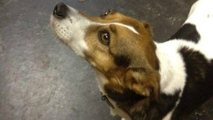 Patch was reunited with his owner after a Twitter appeal