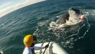Rescuers struggle to free the whale