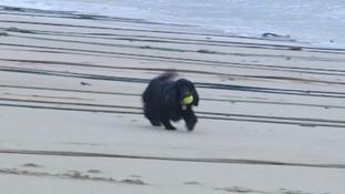 Itv News Dog Beach Ban