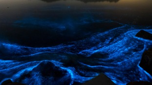 Glow-in-the-dark blue waves caused by the phenomenon known as harmful algal bloom Sea Sparkle.