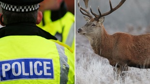 Two police officers who beat deer to death keep jobs